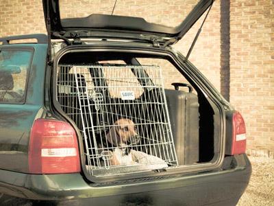 Koiran Kuljetus Autossa