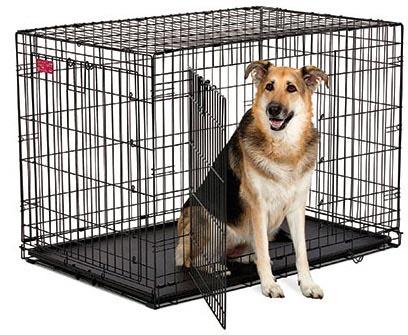 Koiran Häkittäminen